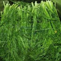100 Pieces Fennel seeds Green Petal Plants Home Garden Flowers Bonsai