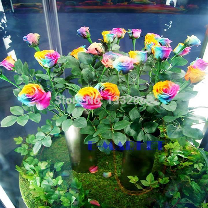 Flower Plants For Home Garden Plants Home Garden Flowers