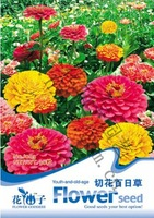 build your garden!  50pcs/lot, fireball flower Zinnia Seeds LF052