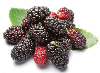 mulberry fructus mori red-black summer fruit winter health care products