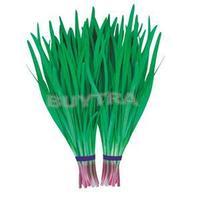 2014 New Novetly 300 Vegetable Seeds/Cheap Purple Root Chinese Leek Seeds