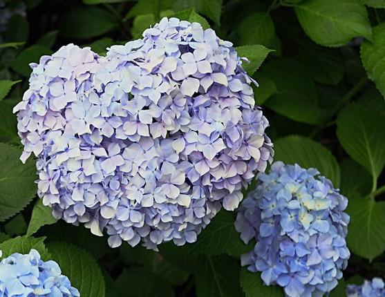 Flower Plants For Home Garden Home Garden Plant House