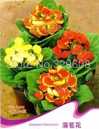 Карликовое дерево Flower Goddess 3 /1 30 A150 A150*3 карликовое дерево flower seeds 100 multi butterfly
