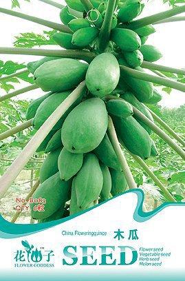 online kaufen gro handel papaya plants aus china papaya. Black Bedroom Furniture Sets. Home Design Ideas