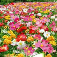 2014 New Practical 1 Bag 200 Seeds/Cheap Portable Perennial Mix Wild Flowers Seeds
