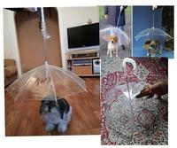 Pet Umbrella (Dog Umbrella) Keeps Your Pet Dry and Comfortable in Rain transparent  Umbrella  H794201