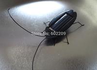 Solar roach toys, Solar Cockroach toys, Solar Toys, Minimum Quantity More than 100 pcs and free shipment