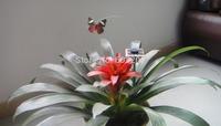Solar Butterfly Toys, 8.2 GW / NW 4.8KG 100PCS / box, Solar Toys,Minimum Quantity More than 100 pcs and free shipment