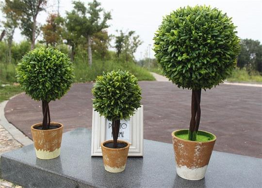 Карликовое дерево карликовое дерево china seeds dionaea muscipula