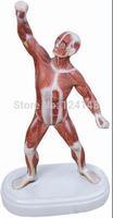 Mini Muscular Figure  model