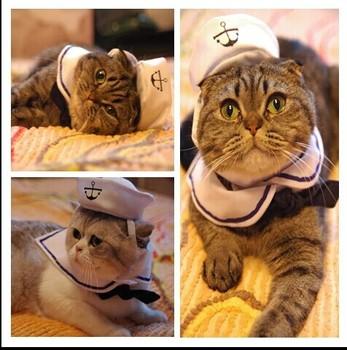 Pet ошейник фестиваль шляпа, темно-синий костюм , для Тедди бишон небольшой собаку погладить маленький кот шляпу