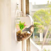 2014 new fashion original design transparent acrylic wall-mounted fish tank aquarium mini wall aquarium Size L 29.5*29.5cm