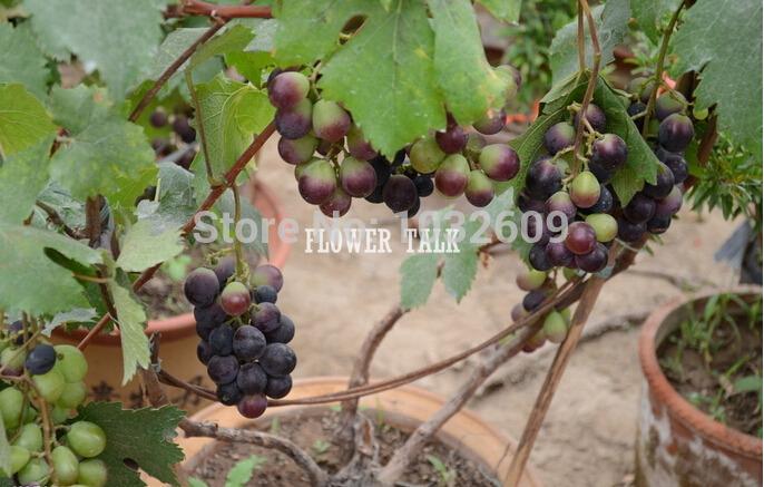 Fruiting Trees Plants Fruit Seeds Indoor Plants