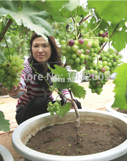 Grapes Fruit or Vegetable Vegetables And Fruits