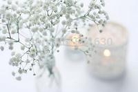 Free Shipping Gypsophila paniculata seeds white Gypsophila pure miss flower seeds flower seeds