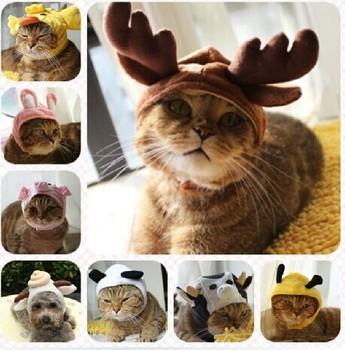 Малый животное шляпу , милые животные преображение любимой кошки собаки шляпы шапка , продукт любимчика