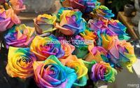 Mix minimum $5 Mix $5 100 pcs Color  Rose seed, patio pots planted, home