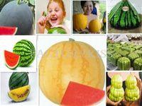 Free Shipping 10pcs x Scarce Rare Watermelon Sweet Fruit Vegetable Seeds Square MIni Cone [4 4013-587]