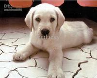 Dog brush Freeshipping Short Hair Dog 24pcs/lot in retail pack pet tools