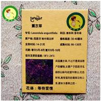 Lavandula angustlfolla -50 seeds
