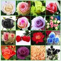 rose seeds, rose bonsai,- 14 Kinds Of 300 Seeds rose plant seed