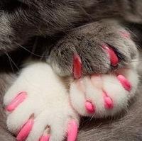 500lots 10000pcs Pet Dog Cat Finger Grooming Floor Protect Pet Dog Cat Nail Caps Claw Control Soft Paw Caps S ,M,L,XL