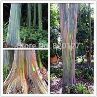 500 seeds RAINBOW TREE* *Wood (Eucalyptus deglupta)* Mindanao Gum Seeds