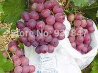 Wholesale Fruit Agriculture 22*32CM Zipper Grape Paper Growing Bag, Grape Protection Bags Can be Biodegradable 4500PCS