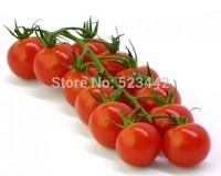 Original Package Fruit Truss Tomato Seeds, 25pcs/bag Four Seasons DIY HOME PLANT Bonsai Fruit Seeds