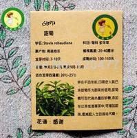 Stevia seeds - 10 pcs