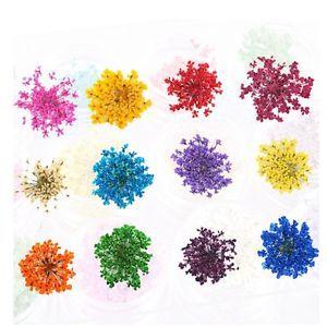 12 Color Dried Flowers Petal 3D Natural Nail ART Tips Design Decoration SET H5(China (Mainland))