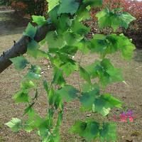 Crown Specials simulation rattan vine grape leaves artificial flowers silk flower wholesale home decor store