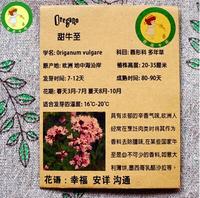 Oregano seeds, sweet oregano seeds, wild marjoram spice seeds - 50 particles