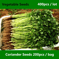Annual Coriander Seeds For Planting 400pcs, Concentrated Flavor Cilantro Vegetable Seeds, Fast-growing Coriandrum Sativum Seeds