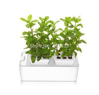 New year garden flower pot hydroponic systems pot