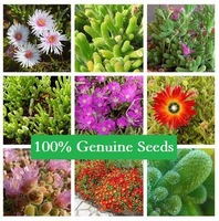 80PCS MIX Mis Aizoaceae potted plants colorful obconica succulents fleshy meaty plant seed