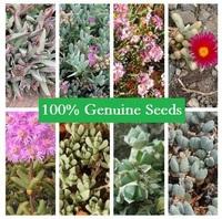 60PCS MIX Mis Aizoaceae Light Mao Ju genus potted plants colorful obconica succulents fleshy meaty plant seed