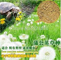 Free shipping 2014 zhe tortoises herbivorous reptile natural planting feeding tortoises feed dandelion grass 1000 pieces