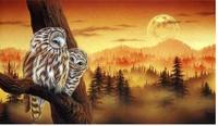 DIY diamond painting creative owl post full 3d diamond drill 55*32