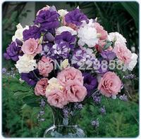 (50 pieces/lot),Eustoma grandiflorum seeds,Platycodon grandiflorus,balloon flower,Balcony potted,seasons planting