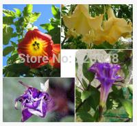 (50 pieces/lot),Datura stramonium seeds,Balcony potted,seasons planting