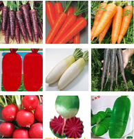 9 kinds radish seeds can choose, Carrots seeds, vegetable and fruit nutrition excellent balcony of  pot minimum order 5 $