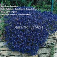 10pcs Rock Cress Cascading Seeds (Aubrieta Hybrida Superbissima Cascade Blue) Cold-resistant Ground Cover Plant  Free Shipping