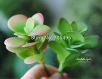 Length 12cm Plastic Succulent Plant  DIY Home & Wedding Decoration Plant Decorative Plant Free Floral Arrangement  Shipping