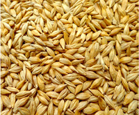 barley shell seeds 0.25 KG grain foods can be germinate fried barley or feed the pigeons and hamsters
