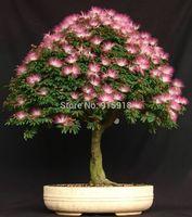 50 Mimosa (Albizia Julibrissin) Seeds, Exotic Bonsai Seeds Home & Garden