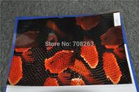 Liquid Image Animal NO. LA005B PVA Water Transfer Printing Film