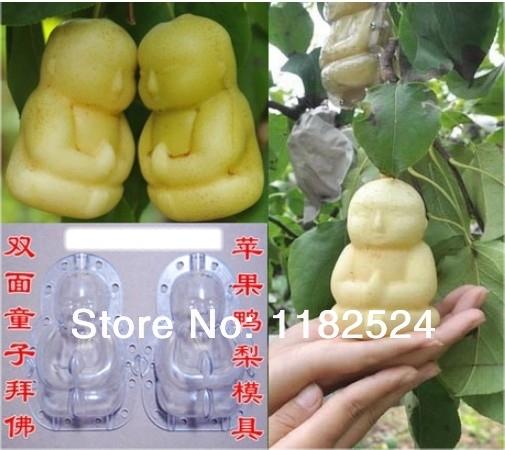 Pear / Apple Fruit Mold - deformação ferramenta de jardinagem(China (Mainland))