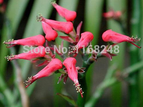 20 pçs/lote semente de flor Exotic semente sementes(China (Mainland))