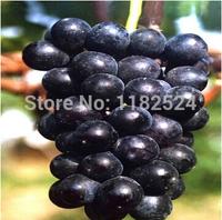 Free Shipping 100pcs Kyoho Grape fruit Tree Seeds